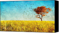 Yellow Photo Canvas Prints - Red Maple Canvas Print by Bob Orsillo