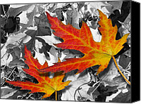 Mariola Szeliga Canvas Prints - Red Maple Leaves Canvas Print by Mariola Szeliga