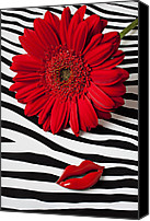 Chrysanthemums  Canvas Prints - Red Mum And Red Lips Canvas Print by Garry Gay