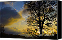 Quercus Canvas Prints - Red Oak Sunrise Canvas Print by Thomas R Fletcher