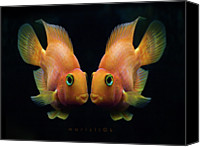 Sea Canvas Prints - Red Parrot Fish Canvas Print by MariClick Photography
