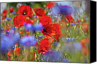 Poppies Canvas Prints - Red Poppies in the Maedow Canvas Print by Heiko Koehrer-Wagner