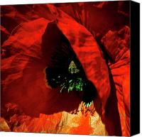 Poppy Petals Canvas Prints - Red Poppy Canvas Print by David Patterson