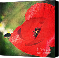 Insects Mixed Media Canvas Prints - Red poppy impression Canvas Print by Angela Doelling AD DESIGN Photo and PhotoArt