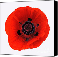 Poppy Petals Canvas Prints - Red Poppy Canvas Print by Rob Hawkins
