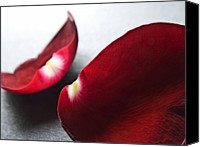 Flower Images Canvas Prints - Red Rose Flower Petals Abstract II - Closeup Flower Photograph Canvas Print by Artecco Fine Art Photography - Photograph by Nadja Drieling