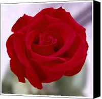 Rose Flower Canvas Prints - Red Rose Canvas Print by Mike McGlothlen