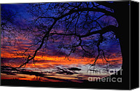 Quercus Canvas Prints - Red Sky at Morning Canvas Print by Thomas R Fletcher