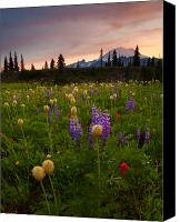 Wildflowers Canvas Prints - Red Sky Meadow Canvas Print by Mike  Dawson