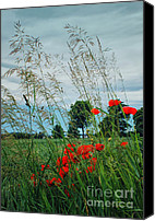 Poppy Digital Art Canvas Prints - Red Spots in the Wind Canvas Print by Jutta Maria Pusl