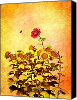 Summer Digital Art Canvas Prints - Red Sunflower Canvas Print by Bob Orsillo
