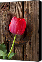 Good Luck Photo Canvas Prints - Red Tulip And Horseshoe  Canvas Print by Garry Gay