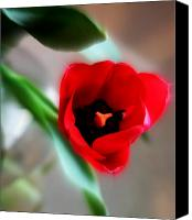 Northwest Art Canvas Prints - Red Tulip Canvas Print by Cathie Tyler