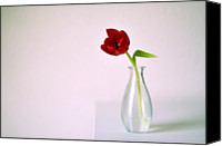 Rotterdam Canvas Prints - Red Tulip In Glass Vase Canvas Print by Photo by Ira Heuvelman-Dobrolyubova