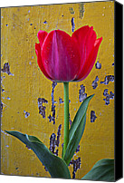 Peeling Canvas Prints - Red tulip with yellow wall Canvas Print by Garry Gay
