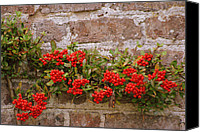Red Berries Canvas Prints - Redberries on the wall Canvas Print by Eva Ason