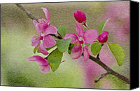 Branches Canvas Prints - Redbud Branch Canvas Print by Jeff Kolker