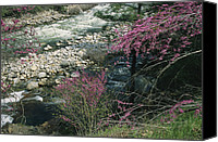 Tree Blossoms Canvas Prints - Redbud Trees In Bloom Along The Banks Canvas Print by Marc Moritsch