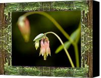 Spiritual. Geometric Canvas Prints - Redwood Columbine Canvas Print by Bell And Todd
