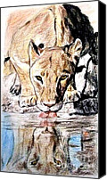 Jim Fitzpatrick Canvas Prints - Reflection of a Lion Drinking from a Watering Hole Canvas Print by Jim Fitzpatrick