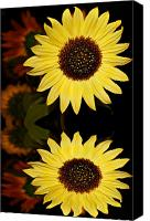 Sunflowers Canvas Prints - Reflection of a Sunflower Canvas Print by Cathie Tyler