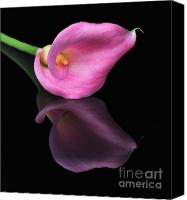 Calla Lily Canvas Prints - Reflections Canvas Print by Susan Candelario