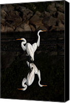 Jim Cumming Canvas Prints - Reflective Moment Canvas Print by Jim Cumming