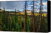 Pine Trees Canvas Prints - Reids Peak Canvas Print by Chad Dutson