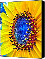 Sunflowers Canvas Prints - Rejoice Canvas Print by Gwyn Newcombe