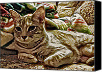 Animals Canvas Prints - Relaxing Miyu Canvas Print by David G Paul