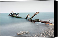 Driftwood Canvas Prints - Remains Of Flood At Mouth Of Salinello. Canvas Print by Marco Equizi