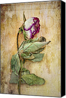 Rose Flower Canvas Prints - Remembrance Canvas Print by Marion Galt