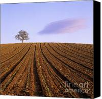 Ploughed Canvas Prints - Remote tree in a ploughed field Canvas Print by Bernard Jaubert