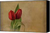 Two Red Tulips Canvas Prints - Rendezvous Canvas Print by Robin-lee Vieira
