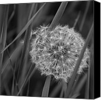 Monocromatico Canvas Prints - Renewal Canvas Print by Sharon Mau