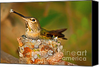 Aves Canvas Prints - Repairing  Canvas Print by Robert Bales