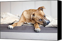 Dog Bed Photo Canvas Prints - Rescue Puppy Canvas Print by Nicole Kucera