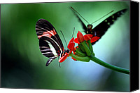 Insect Photography Canvas Prints - Reservations For Two Canvas Print by Skip Willits