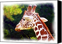 Judi Bagwell Canvas Prints - Reticulated Giraffe Canvas Print by Judi Bagwell