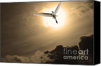 Snowy Egrets Canvas Prints - Return To Eternity . Gold Cut Canvas Print by Wingsdomain Art and Photography