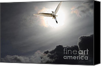 Snowy Egrets Canvas Prints - Return To Eternity Canvas Print by Wingsdomain Art and Photography