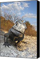 Rhinocerus Photo Canvas Prints - Rhinoceros Iguana Isla Cabritos Canvas Print by Reinhard Dirscherl
