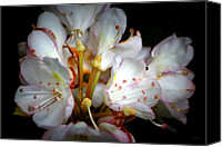 Debbie Photo Canvas Prints - Rhododendron Explosion Canvas Print by Deborah  Crew-Johnson