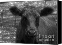 Black Angus Canvas Prints - Ribeye Canvas Print by Elizabeth Coats