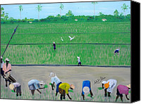 Nicole Jean-louis Canvas Prints - Rice Field Haiti 1980 Canvas Print by Nicole Jean-Louis