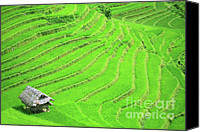 Poverty Canvas Prints - Rice field terraces Canvas Print by MotHaiBaPhoto Prints