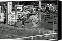 Bulls Photo Canvas Prints - Ride Em Cowboy Canvas Print by Shawn Naranjo