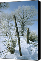 Barbed Wire Fences Canvas Prints - Rime From Rare Fog Coats Fence Canvas Print by Gordon Wiltsie