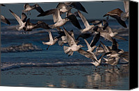 Kiawah Island Canvas Prints - Ring-Billed Gulls at Kiawah Island Canvas Print by Melissa Wyatt