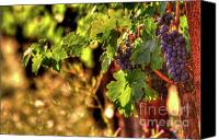 Blue Grapes Canvas Prints - Ripe Cabernet 3 Canvas Print by Mars Lasar